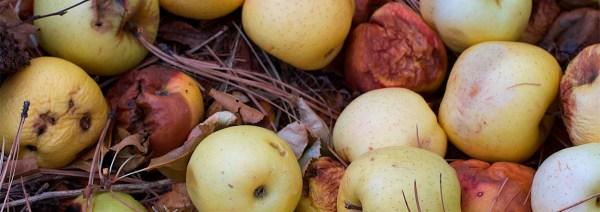 LevineRotten Apples